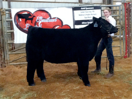 2012 Champion & Reserve Steer